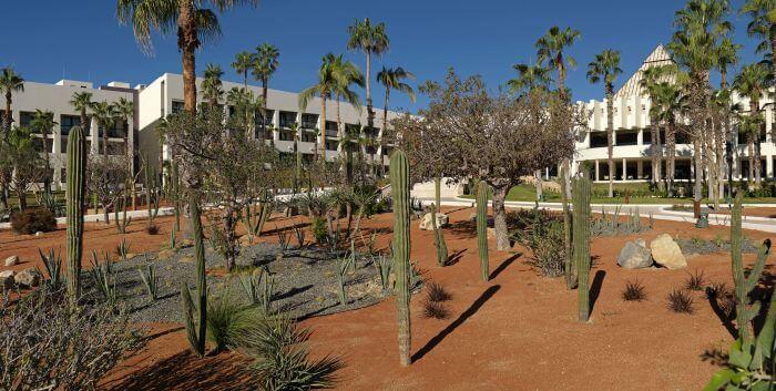 garden with cacti area paradisus los cabos